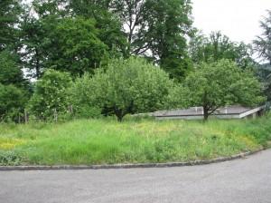 Ein schönes Stück Land in Reinach mit zwei Apfelbäumen
